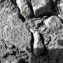 Fósiles en Marte?